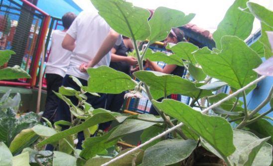 Plantio e Colheita